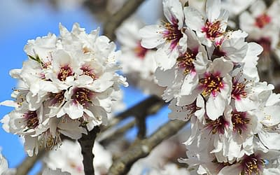 Almonds could use produced water!